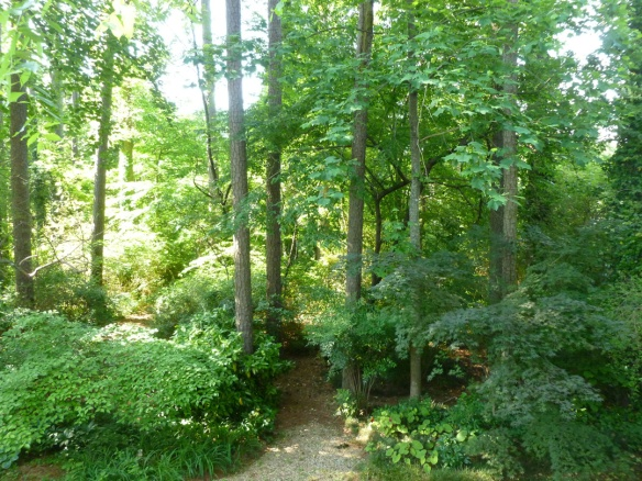 "My favorite view, looking into the entrance to our little ""forest"" of paths and shade garden."