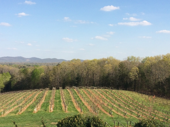 The vines at Frogtown.