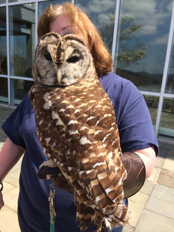 owlcapone1