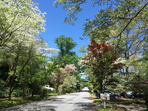 springtrees