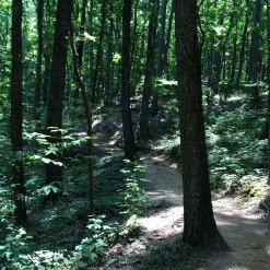 The trail is very forested and goes up.