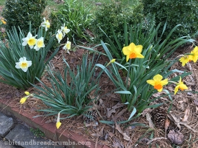 First signs of Spring!